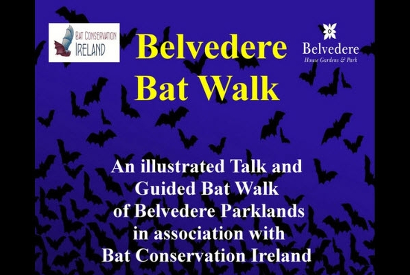 Free Bat Walk and Talk on Bats, at Belvedere, in association with Bat Conservation Ireland